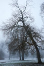 Crooked tree in winter haze Royalty Free Stock Photo