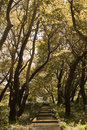Crooked trees view of forest with Royalty Free Stock Photo