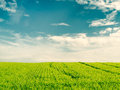 Crop field beautiful on blue cloudy sky Royalty Free Stock Photography