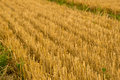 A crop field after harvest Royalty Free Stock Photo