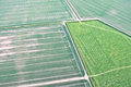 Crop fields Royalty Free Stock Photo