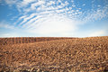 Crop fields at blue sky Royalty Free Stock Photo
