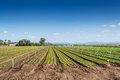 Crop Fields, clear blue sky Royalty Free Stock Photo