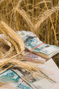 Crop of wheat and money. Royalty Free Stock Photo