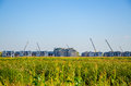 Cropland and building group under blue sky Stock Images