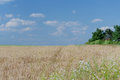 Cropland in a sunny afternoon with blue sky and white clouds Stock Photos