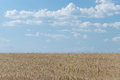Cropland in a sunny afternoon with blue sky and white clouds Royalty Free Stock Photography