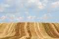 Cropped fields scandinavian with the skies in the background Royalty Free Stock Images