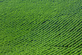 Crops and in the furrow Royalty Free Stock Photo