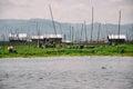 Crops at Inle Lake. Royalty Free Stock Photo
