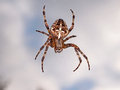 Cross back spider a with a cloudy background Stock Photography