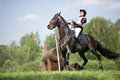 Cross-country. Disobedience (zakidka) horse Stock Photo