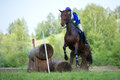 Cross-country fence. Disobedience horse Stock Photo