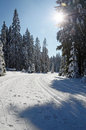 Cross Country ski track Royalty Free Stock Images