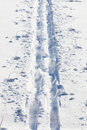 Cross country ski tracks in soft snow Stock Photo