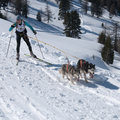 Cross-country skier and two siberian husky Stock Image