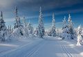 A winter landscape, decorated with cross country skiing trails. Royalty Free Stock Photo