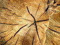 Cross-section of an old tree trunk Royalty Free Stock Photo