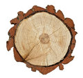 Cross-section of a tree trunk Royalty Free Stock Images