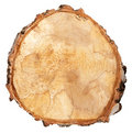 Cross section of a tree trunk Stock Photos
