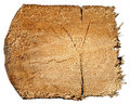 Cross section of tree trunk isolated Stock Photo