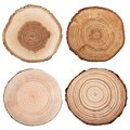 Cross section of tree trunk isolated on white. Royalty Free Stock Photo