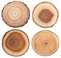 Cross section of tree trunk showing growth rings set isolated on white background.
