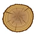 Cross section of tree vector illustration Stock Image