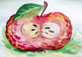 A cross sectional drawing of an apple gouache in the context Stock Images