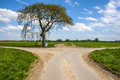 Cross way with single tree Royalty Free Stock Image