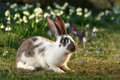 Crossbreed rabbit Stock Image