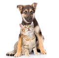 Crossbreed and small tabby cat on white background isolated Royalty Free Stock Photo