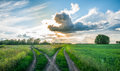 Crossroads in the field at sunset. Split country road. Beautiful clouds. Rural landscape Royalty Free Stock Photo