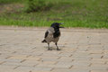 Crow costs on a stone blocks.