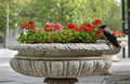 Crow on flowerpot Stock Images