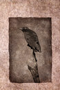 Crow perched on dead tree branch rendered in atmospheric sepia tones with surrounding grunge border Stock Images