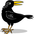 Crow or raven bird cartoon illustration of black Royalty Free Stock Photo