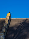 Crow on a Roof Royalty Free Stock Photo