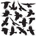 Crow silhouette set collection vector Stock Images