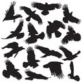Crow silhouette set collection vector Royalty Free Stock Photography