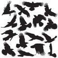 Crow silhouette set 02 Royalty Free Stock Photo