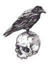 Crow on Skull Royalty Free Stock Photo