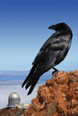 Crow on top of the world Stock Photos
