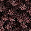Crowd of Cannabis leaves on black background