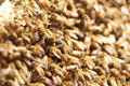 Crowded bees busy gathering together Royalty Free Stock Photo