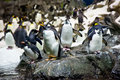 Crowded colony of penguins on the stone coast mountains in background Stock Photo