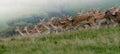 Preplnený stádo z divoký ležiace ladom jeleň