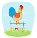Crowing rooster on farm illustrations of Stock Photo