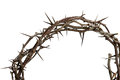 Crown of thorns isolated over white background Stock Image