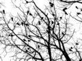 Crows (4) Stock Images